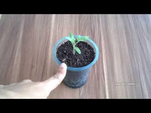 Budidaya Terung Sawi Cabai Tomat Dan Bawang Merah D
