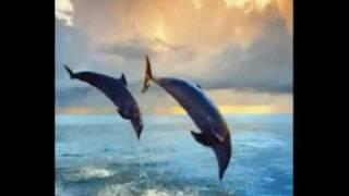 six magics video animal yt:crop=16:9