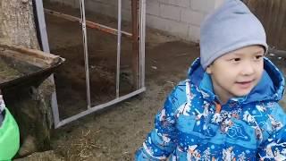 Дети и родители. Животные в зоопарке. Страусиная ферма. Funny Animals in zoo