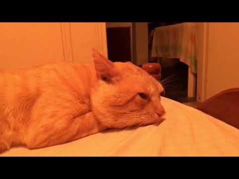 "My Cat Loves ""Pink Floyd Music."