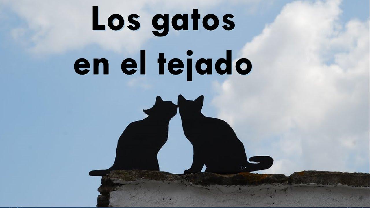 los gatos en el tejado