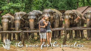 It Doesn't Have To Be The End  Boho Diaries | Ep.12 Elephant Haven Thailand