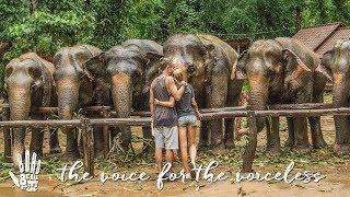 Elephant Sancturies NOT Elephant Riding Camps!  Boho Diaries | Ep.11 Elephant Haven Thailand