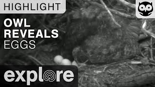 Long Eared Owl Reveals its Eggs on Night Vision - Live Cam Highlight thumbnail