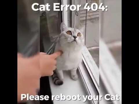 Cat error 404
