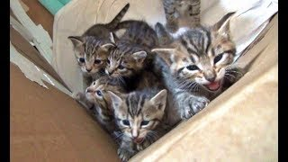 A Day In The Life Of Our Foster Kittens