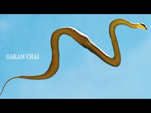 మొదటి సారిగా హైదరాబాద్ లో దొరికిన ఎగిరే పాము | Flying Snake Found In Hyderabad | GARAM CHAI