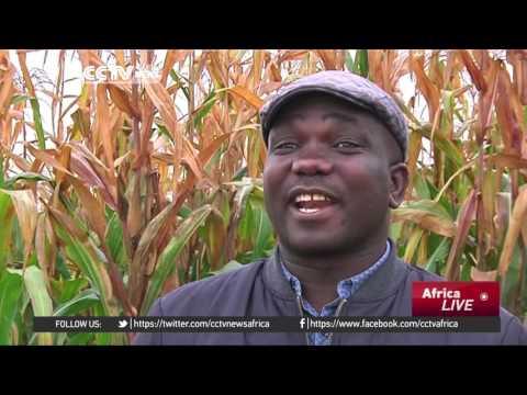 Zimbabwean migrants build profitable farm business in South Africa