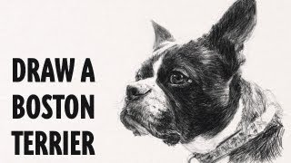 How to draw a dog : Boston Terrier : Artist Reference Time Lapse : Watch n Learn