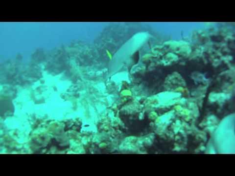 Lionfish Hunting GoPro - Cayman Islands