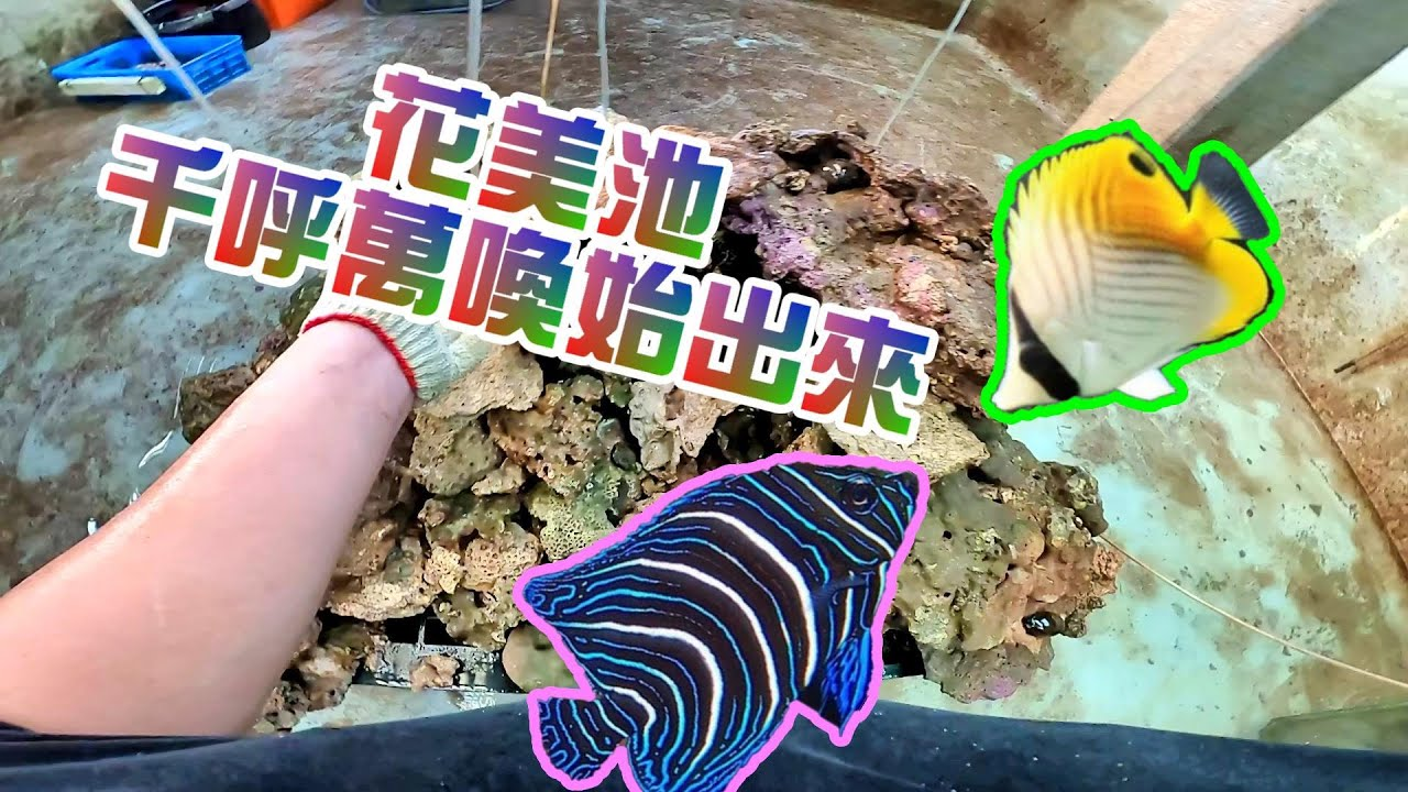 【阿坤的水族遊樂園】花美池硬體完工