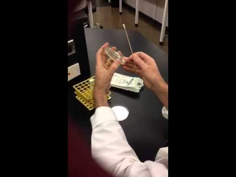"""introduction microbiology cp4089 experiment 4 colony count Lab exercise 5: pure culture techniques  introduction as you learned in lab 4, microbes exist everywhere,  define the term """"colony"""" 4 explain how dilution ."""