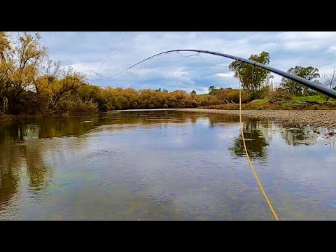 Goulburn River | Nymph Below Dry (Dry Dropper) | Fly Fishing Flat Water