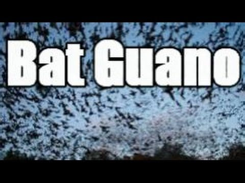 Is Bat Guano a Sustainable & Environmentally Friendly Fertilizer?