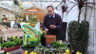 Weekly gardening tips. Week 1