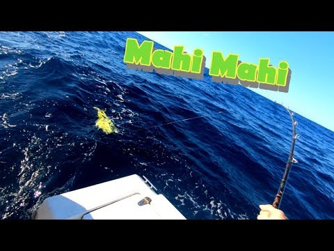 How To Troll For Mahi Without Outriggers In A Small Boat