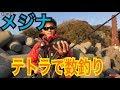 【メジナ釣り】テトラでグレ釣りしたら爆釣だった の動画、YouTube動画。