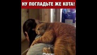 Ну погладь же кота!