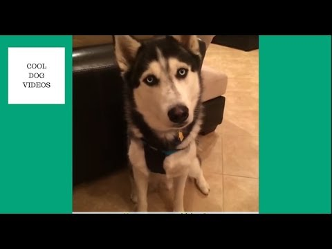 Steel The Dog – Best Vines (RIP VINE)