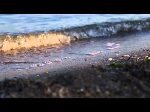 Отдых на Азовском море 2017 - пансионаты, частный сектор