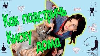 Как подстричь кота / Стрижка кошек дома / How to groom a cat / #LLChannel