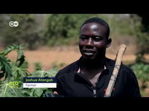 Helping small-scale farmers in Ghana market their products