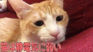 猫は静電気に弱いという話 thumbnail