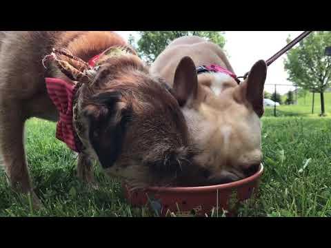Pet Safety Tips | Ontario Veterinary Medical Association