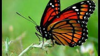 Уроки ЖИЗНИ - урок бабочки