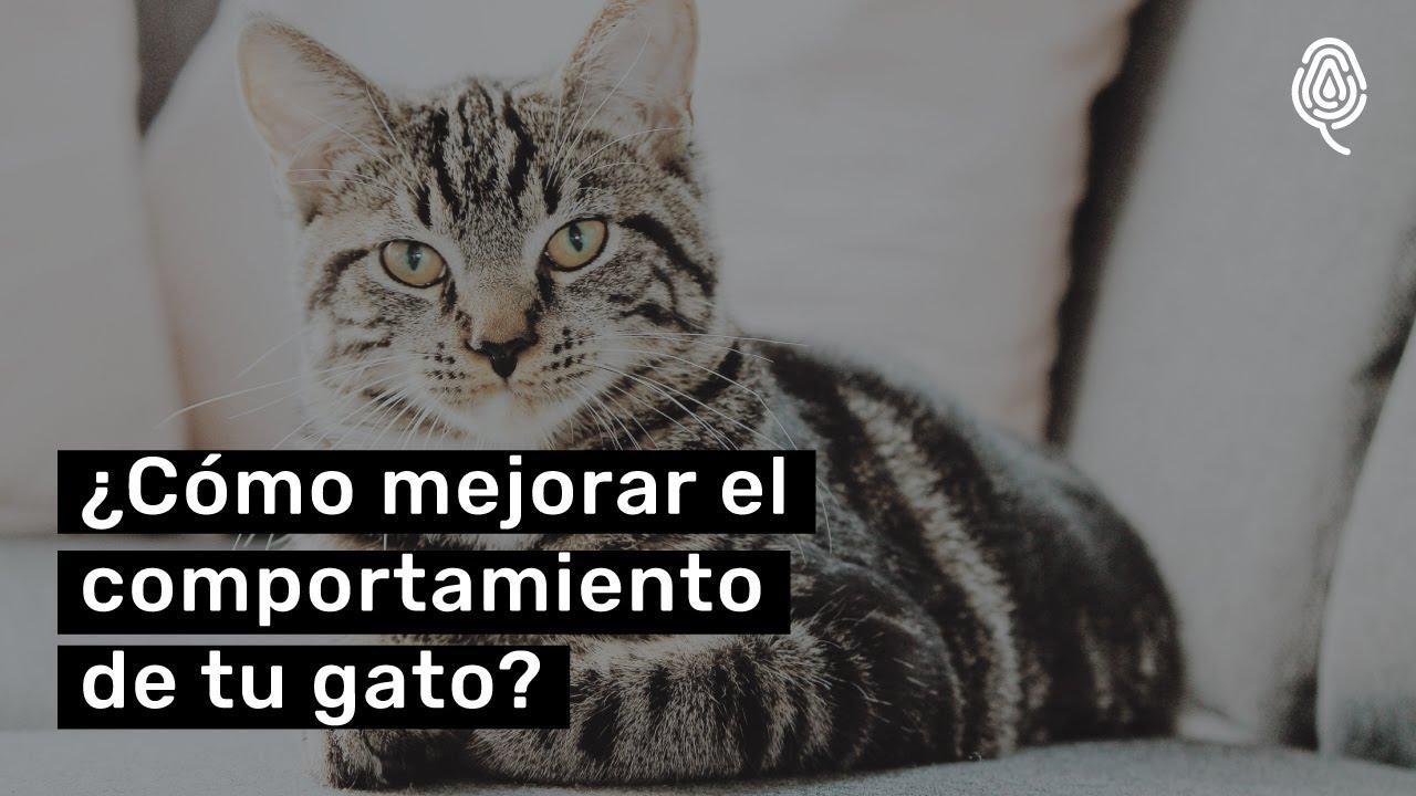 ¡Consejos para educar a tu gato!