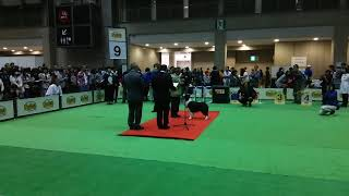 FCI Japan International DogShow2018 BorderCollie President's Award ...