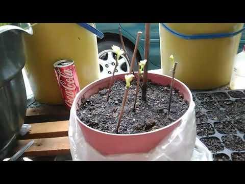 GN: Mga paraan para ma-recycle ang non-biodegradable materials from YouTube · Duration:  5 minutes 53 seconds