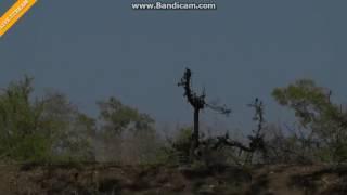 Pawiany Afryka Safari 2016 08 22 09 00 51 918