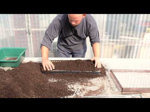 Terrateck - Paper pot transplanter seeding system in chain pot