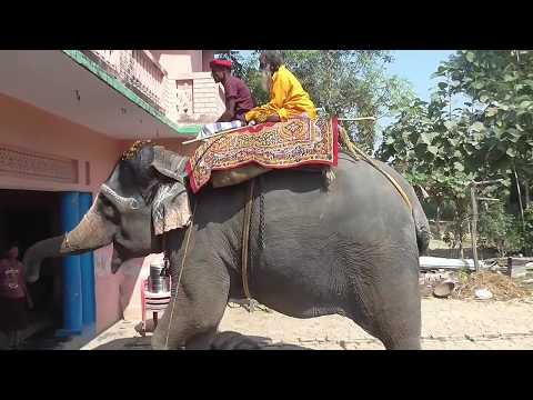 खोरठा गांव में यग के दौरान हाथी हुई पागल | फिर क्या हुआ आप वीडियो में देखे | Khortha jag puja