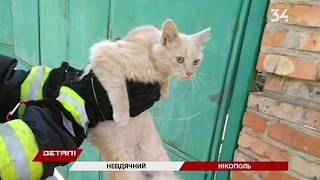 В Никополе сотрудник ГСЧС попал в больницу после укуса кота