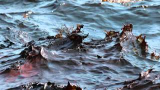 Gulf of Mexico Oil Spill PSA