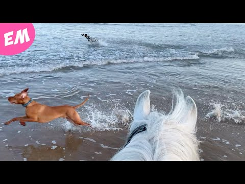 The Dogs and Ponies got to enjoy a trip to the beach!