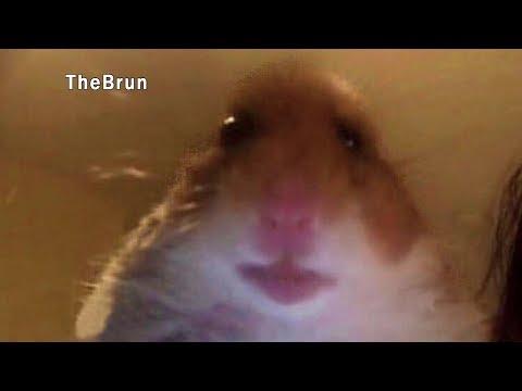 видео: УЛЫБНУЛИСЬ ИЛИ ЗАСМЕЯЛИСЬ   ПРОИГРАЛИ ! The Brun