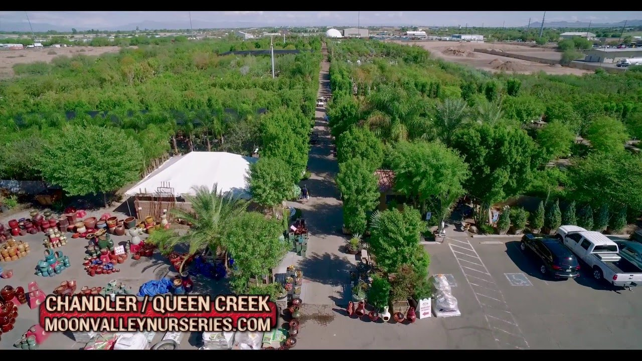 Moon Valley Nursery Chandler Queen Creek