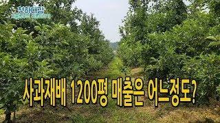 사과재배 1200평 매출 소득 / 사과농사 귀농 3년차…