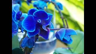 Виды орхидей(Видео про различные виды орхидей, их множество. Орхидеи очень красивые и нежные цветы. В Италии, на полуост..., 2014-02-06T03:22:12.000Z)