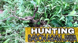 Video Hunting bonsai - proses dongkel asam jawa download MP3, 3GP, MP4, WEBM, AVI, FLV Juni 2018