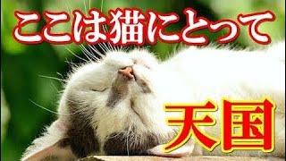 海外の反応 驚愕!日本の野良猫のとある特徴に外国人ビックリ!日本は猫にとって天国だよ【あおいちゃんねる】