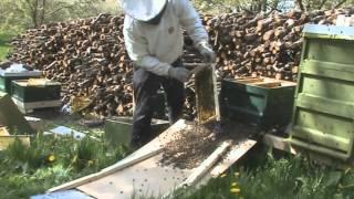 Пчеловодство Искуственное Роение Пчёл 2