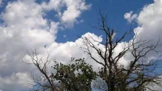 Poludjela ptica - Dalibor Brun