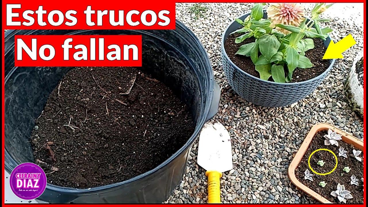 Podrás TRASPLANTAR cualquier planta con estos sencillos trucos, y tendrás resultados fabulosos.