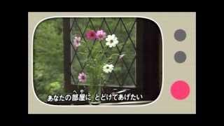 吉川由美/風の歌が聞こえますか
