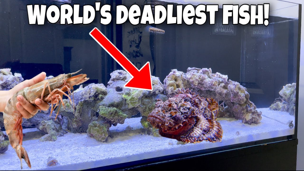 FEEDING The World's DEADLIEST FISH!!