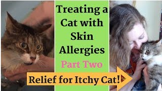 Relief for Itchy Cat! Treating Skin Allergies - Home Remedies